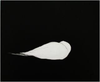Dyptrykk, white bird dying